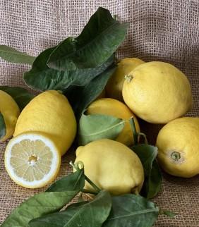 Citron de Nice